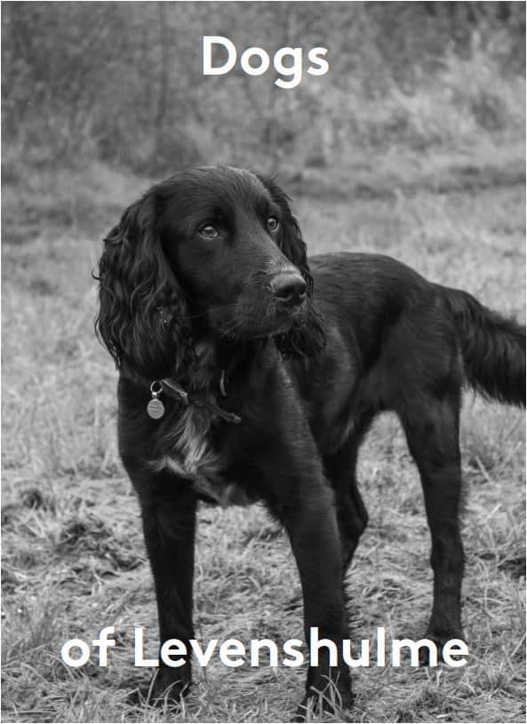 Dogs of Levenshulme calendar